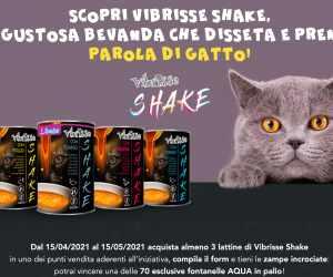 VIBRISSE SHAKE